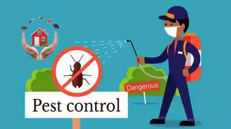 Termite Control Adelaide