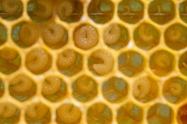 How to kill fly larvae