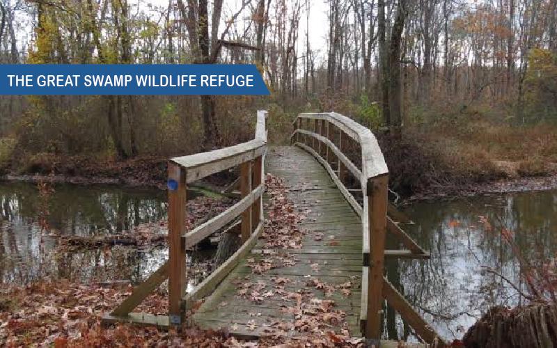 The-Great-Swamp-Wildlife-Refuge