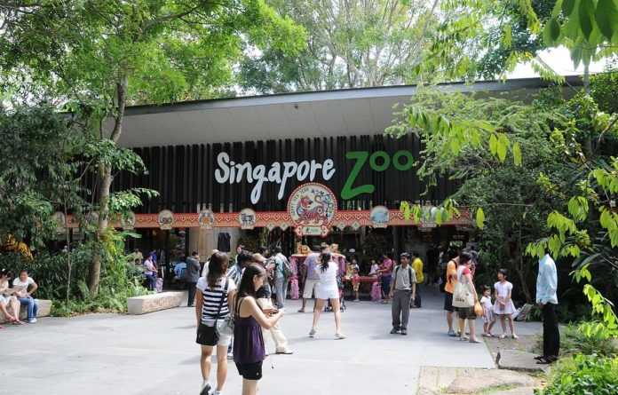 Tips for Visiting the Singapore Zoo