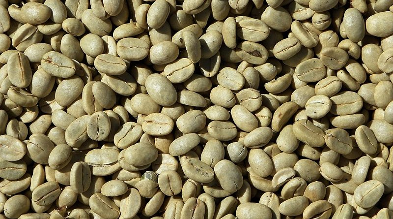 Buy Green Coffee Beans Online