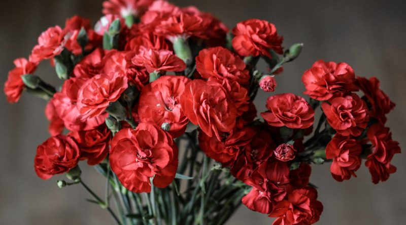 Five Reasons Why Red Flowers are Considered Romantic