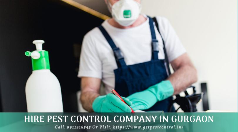 Hire Pest Control Company in Gurgaon