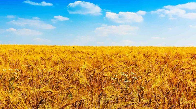 Ireland Agriculture Market