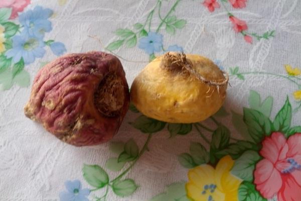 Maca Root Health Benefits