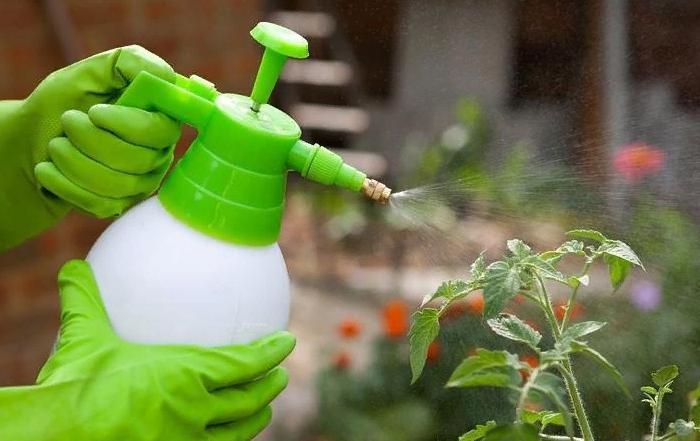 Plants Free of Pests