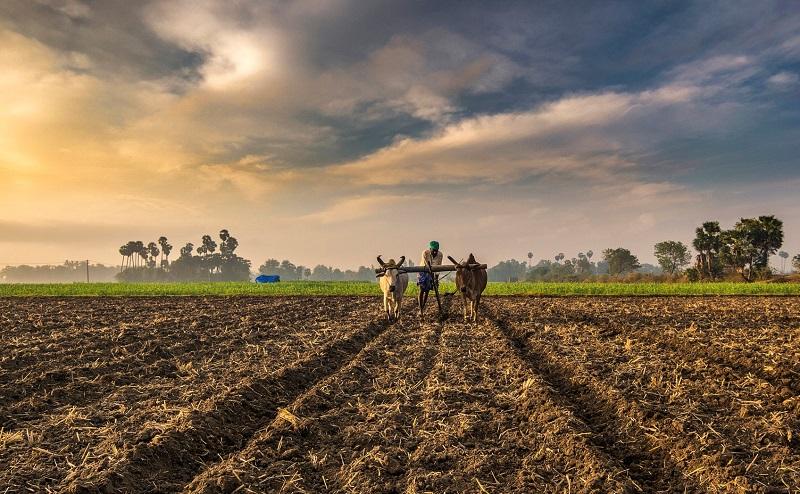 Saudi Arabia Agriculture Market