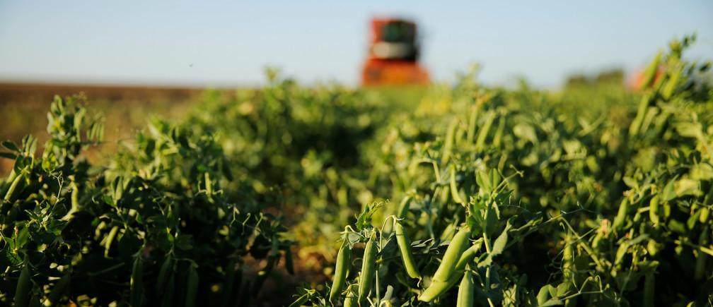 Turkey Agriculture Market