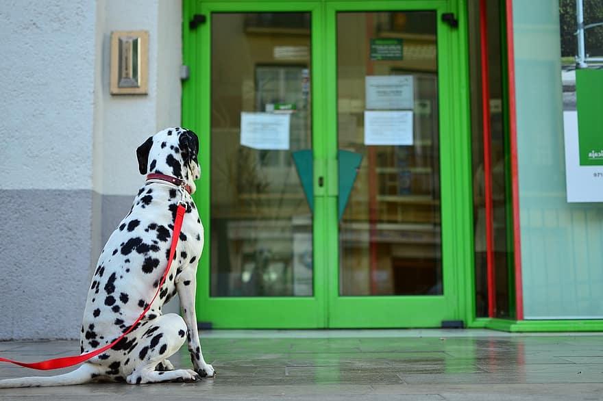 Doggy Doors