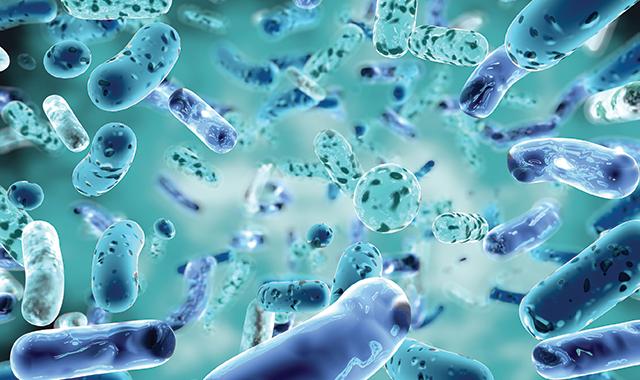 Probiotics Oral