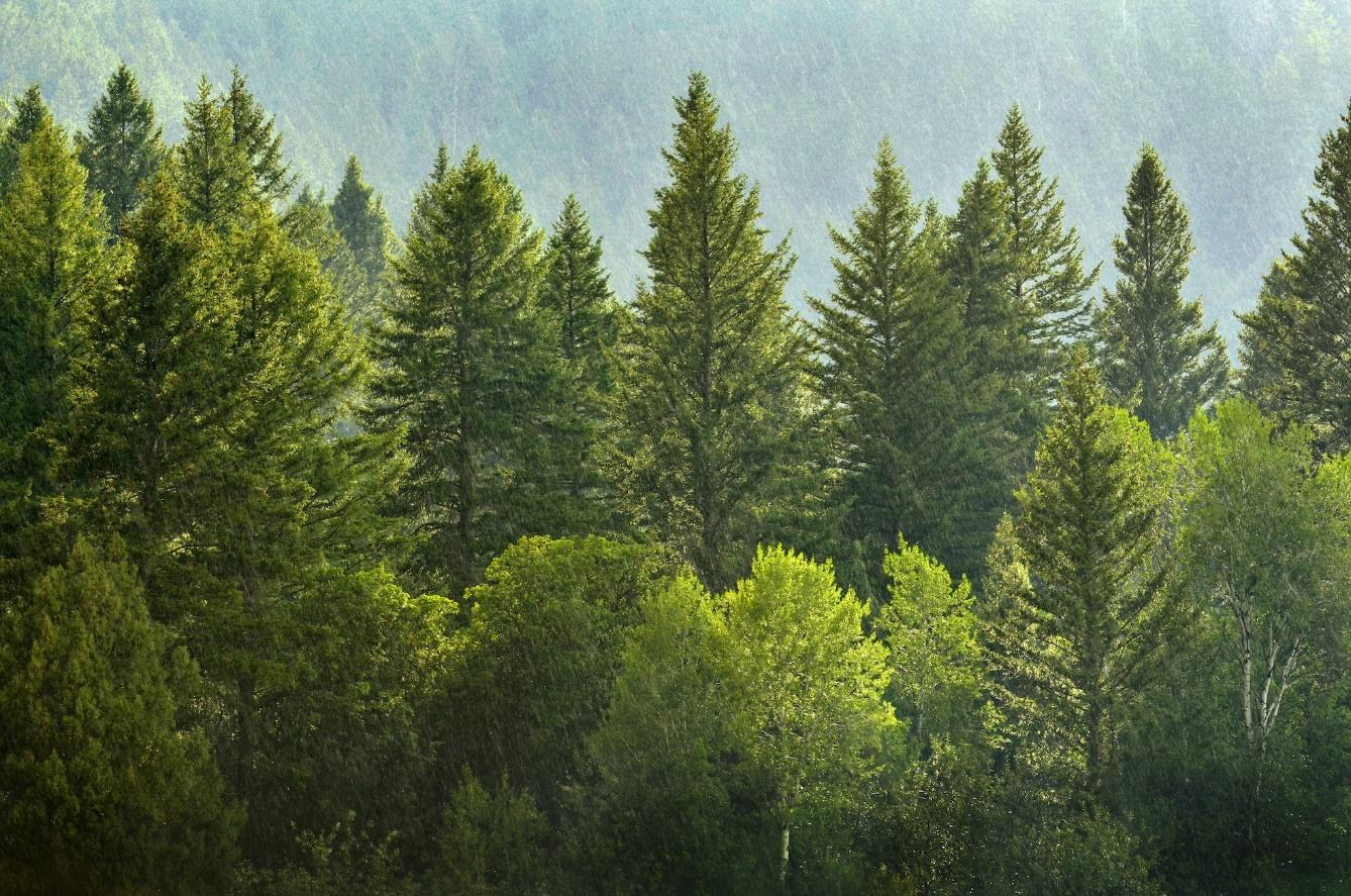 How Fast do Pine Trees Grow? - TIME BUSINESS NEWS