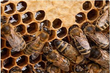 bee control near me