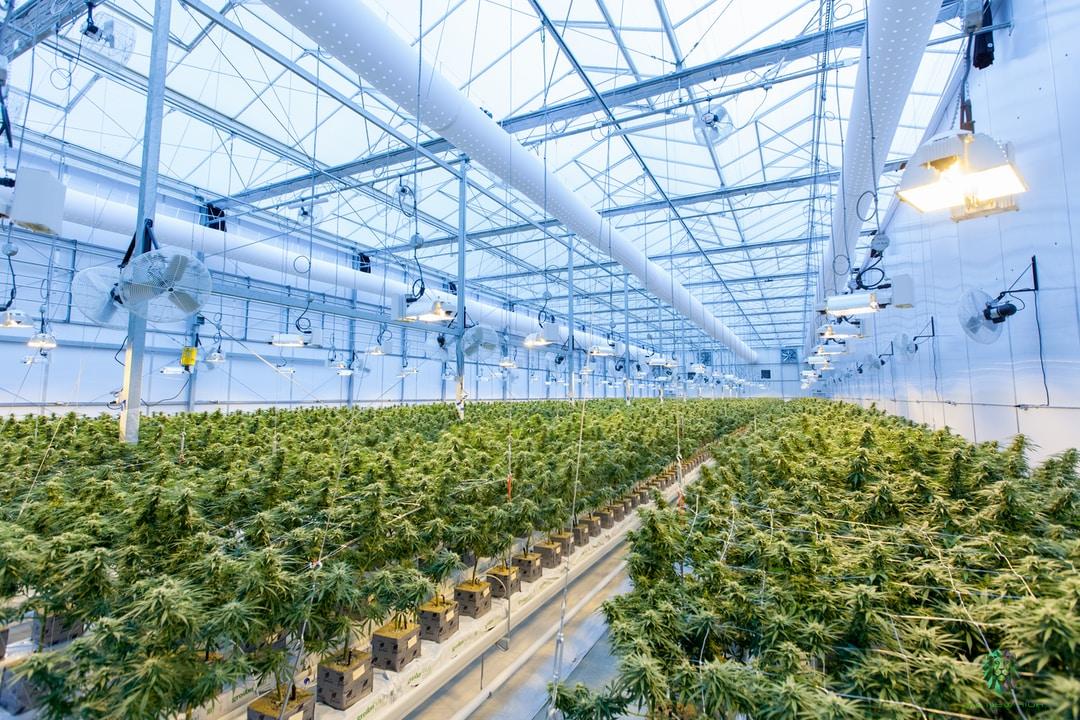 How Medical Experts View Marijuana
