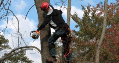 tree care professional